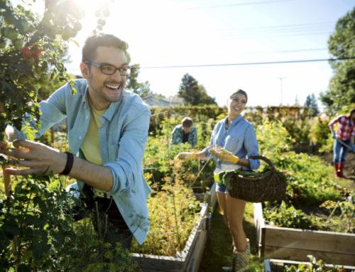Farmers Markets and CSAs
