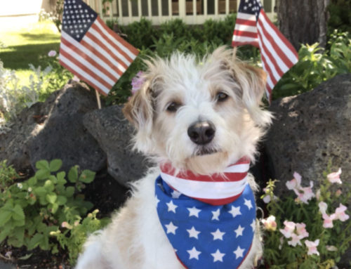 4th of July Virtual Pet Parade